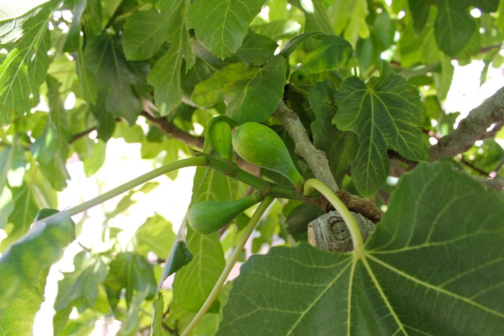 Fruit 2 (2/4)